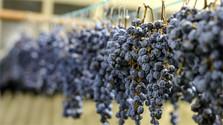 Slamové víno - vino de paja de Topoľčianky