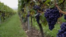 Vinárskych obcí je viac