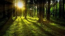 Slovenské lesy