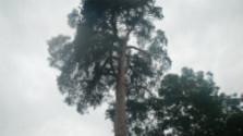 V  korunách stromov: Prírodné bohatstvo Hlohovca
