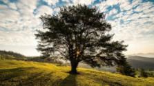 V korunách stromov: Náš postoj k stromom včera a dnes