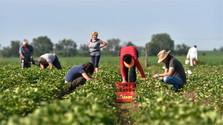 Risikofonds für slowakische Landwirte