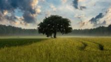 V korunách stromov: Ako sa vyberá strom roka