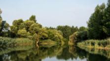 Dobrovoľníci zachraňujú Dunajské luhy