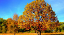 Glosa: Prichádza jeseň