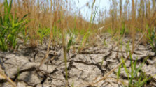 Štát sľubuje odškodné pre poľnohospodárov za vlaňajšie sucho