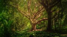 Duša lesa