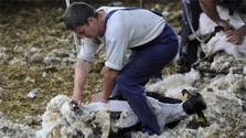 """Nobody wants to buy our wool"""