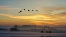 Ochranári sa chystajú na zimné sčítanie vtáctva