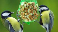 Zimné prikrmovanie vtáctva