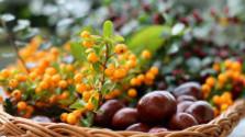 Superpotraviny a ich vlastnosti