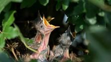 Rückgang der Vogelbestände auch in der Slowakei