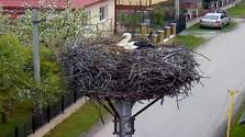 1 de abril – el Día de los pájaros