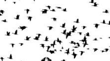V apríli vtáky migrujú naplno a mnohé aj hniezdia