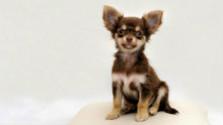 Psie meno - avízo