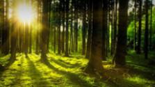Prírodná rezervácia Sedliská