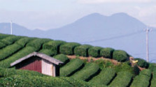 Japonsko - krajina čaju, čajovej keramiky a tajfúnov
