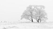 Ivan Habaj: Sypal sa sneh na krajinu (1980)