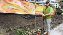 Dažďová záhrada pri košickej geriatrii