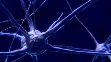 Medzinárodný deň sklerózy multiplex