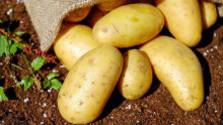 Ceny zemiakov sa vyšplhali na rekordné úrovne