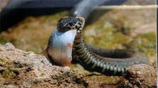 Любители герпетофауны: не надо бояться змей и рептилий