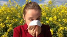 Glosa: Leto a alergie