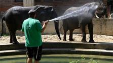 Бойницкий зоопарк стал участником международной программы EAZA