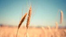 Vývoj prípravy spoločnej poľnohospodárskej politiky po 2020
