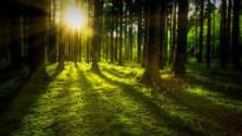 Malokarpatské lesy v lete