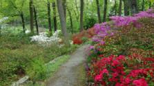 Arborétum v Novej Dubnici