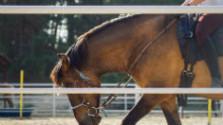 Prázdniny bez rodičov: V jazdeckom tábore na farme