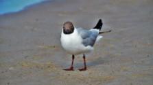 Na nádrži Kráľová hniezdia vtáky aj na ťažobných pontónoch