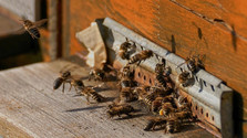 Ako skladovať med