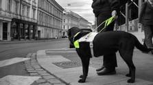 Blindenführhunde sollte man nicht stören