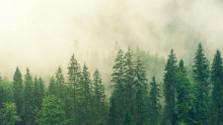 Pred 250 rokmi vznikla tereziánska lesná reforma