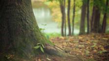 V bratislavských lesoch sa toho dá zažiť veľa