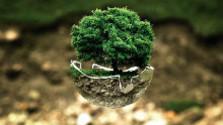 Glosa: Nedovoľme, aby sa z lesa stal odpadkový kôš