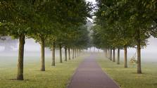 Živé mesto_FM: Budúcnosť stromov