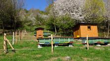 En Kremnica aprovecharán la apicultura para la apiterapia