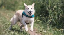 V Trenčíne otvorili psiu dráhu pre psov