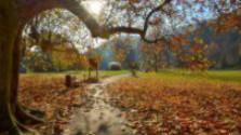 Jeseň v Trenčianskych Tepliciach