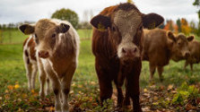 Farmu v Dolných Otrokovciach čaká modernizácia