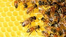 Včelársky spolok v Senici vznikol pred sto rokmi