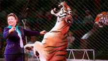 En Eslovaquia ya no será posible ver en circos animales salvajes