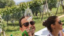 Die Weinstraße der Kleinen Karpaten