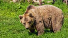 Situácia s medveďmi vo Vysokých Tatrách