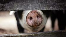 Nelegálna farma v Dubnici nad Váhom by mala čoskoro zmiznúť