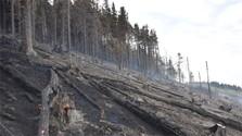 La madera de los bosques destruidos ayudará a los más necesitados