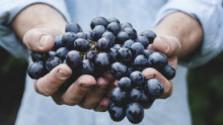 Vinári bilancujú